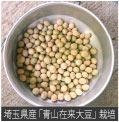 埼玉県産「青山在来大豆」栽培